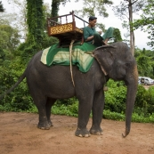 One way to see some of the Angkor temples