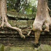 Ta Prohm: the jungle temple