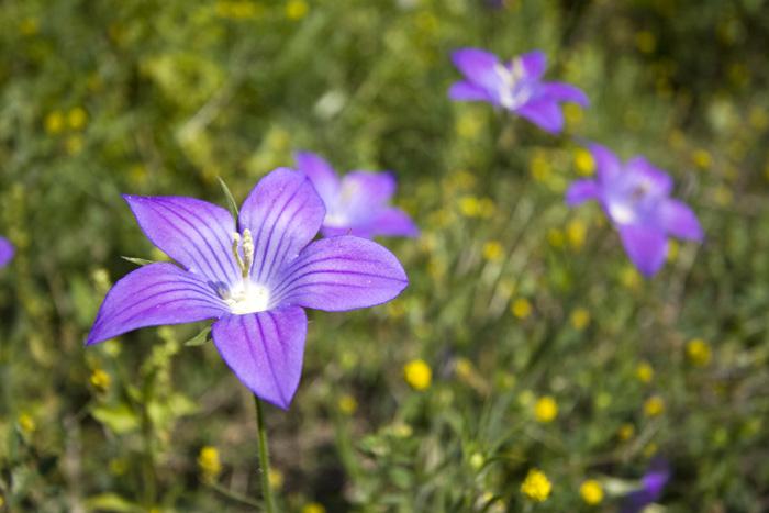 Kerkyra wildflowers