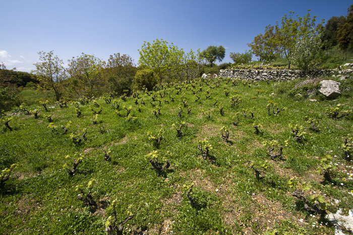 Kerkyra mountain vineyards