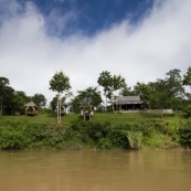 The elephant village on the banks of the Nam Khan River