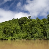 The dense jungle on the banks of the Nam Khan River