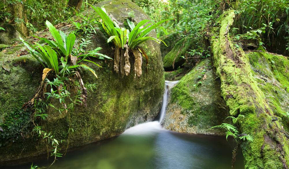 Wurrmbu Creek in Mossman Gorge