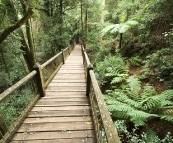 Rainforest in Dorrigo National Park