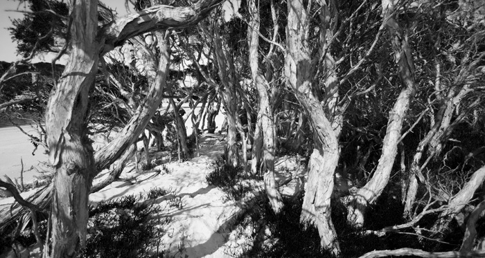 Paperbark trees lining Saint Mary's Inlet