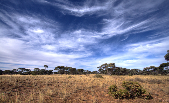 Big skies above the Mallee scrub on the Nullarbor Plain