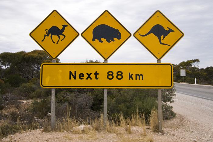 Crossing the Nullarbor Plain