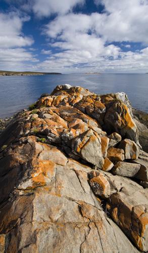 Striking orange lichen on the rocks in Memory Cove