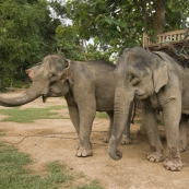 Two of the elephants in our group