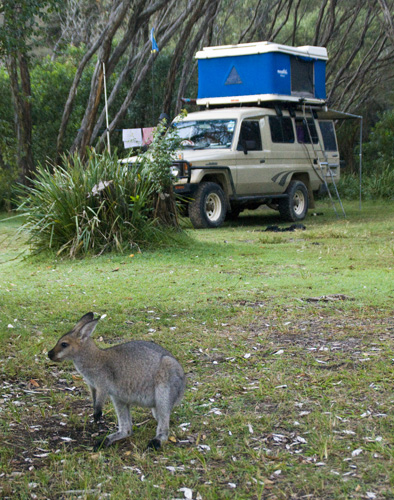 Campsite companions at Kylies Beach