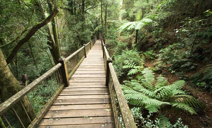 Rainforest in Dorrigo National Park