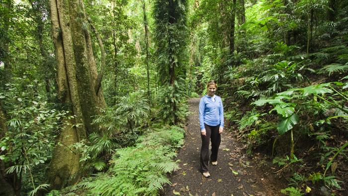 Lisa hiking through the rainforest in Dorrigo National Park