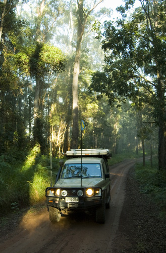 The Tank cruising through the rainforest in Nymboi Binderay National Park