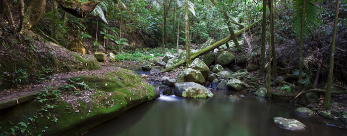 The trail through the rainforest from our campground in Border Ranges National Park