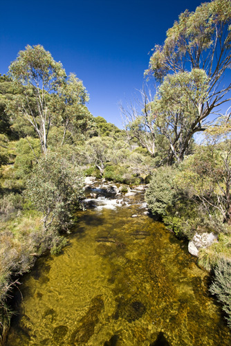The Thredbo River