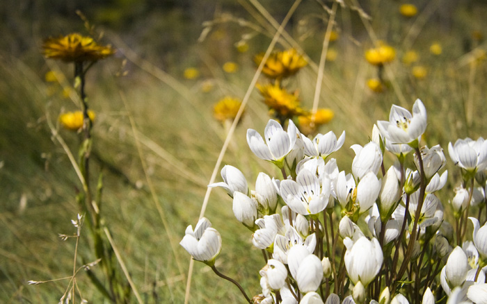 Mountain wildflowers on the way to Dead Horse Gap