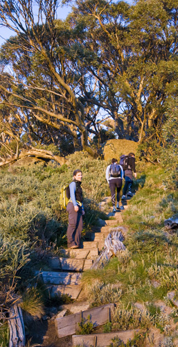 On the way up Merritts Nature Trail just after sunrise