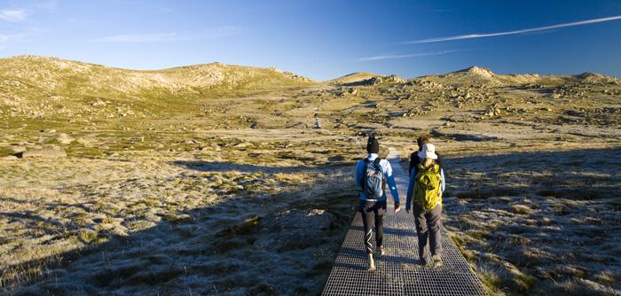 A frosty boardwalk on the way to Mount Kosciuszko