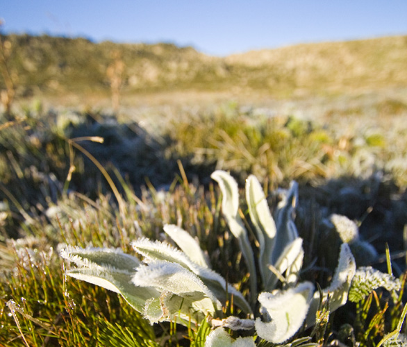 Icy plants in the early morning light