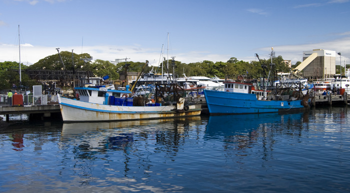 Moored fishing boats at the Sydney Fish Market