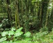 Lush rainforest in Dorrigo National Park