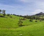 Beautiful cattle country around Tilba Tilba