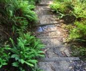 The hiking trail to Leura Cascades