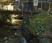 The trail through Leura Forest