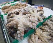 Fresh octopus at the Sydney Fish Market