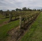Adina Winery