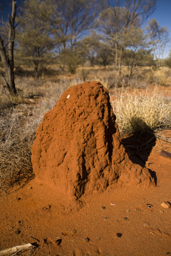 A termite mound along the side of the Stuart Highway