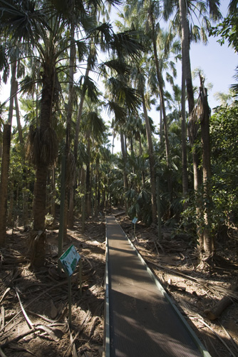 The walkway to Mataranka Springs
