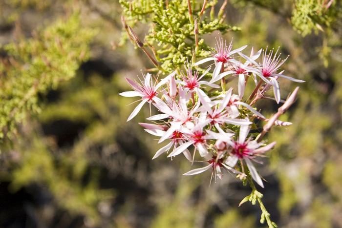 Wildflowers on the walk to Gubara Pools
