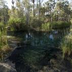 Bitter Springs
