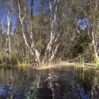 Lisa swimming in Bitter Springs