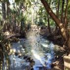 Mataranka Springs