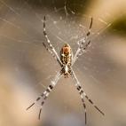 An orb spider at Leliyn\'s upper falls
