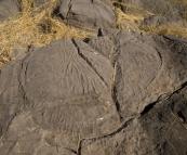 Stromatolites at Limestone Gorge