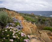 Wildflowers at Sugarloaf Rock