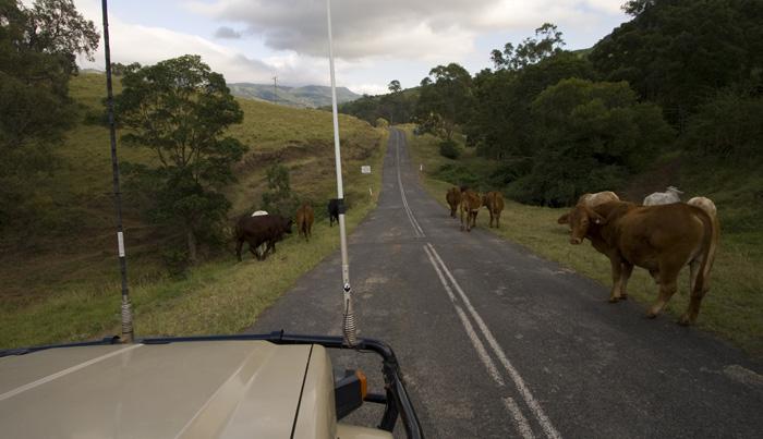 Roadblocks on the Lions Road