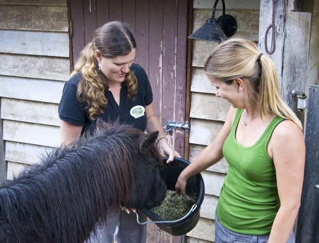 Branell Homestead: feeding Angel the miniature pony