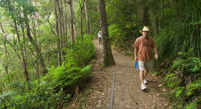 Randy on the Kondalilla Falls Circuit