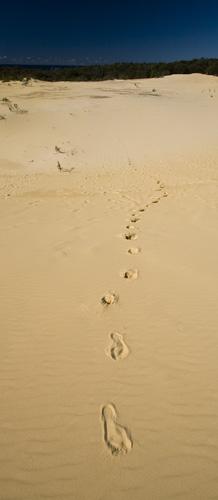 The Wungul Sandblow