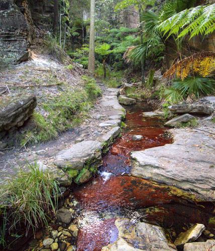 Lush Ward's Canyon