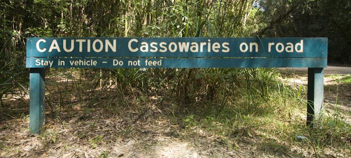 qOur first sign of Cassowaries in Girringun National Park