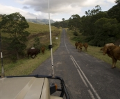 Roadblocks on the Lions Road