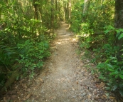 The trail through the rainforest at Finch Hatton Gorge