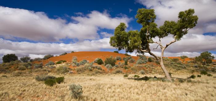 Strzelecki Desert dunes