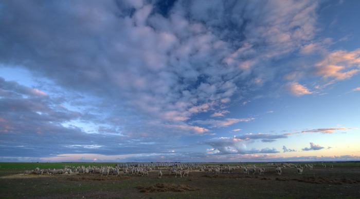 Sheep and a colorful Yorke Peninsula sunset behind Rebecca and Ed Brown\'s house