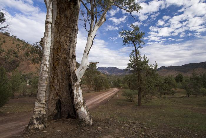 The road down into Bunyeroo Gorge